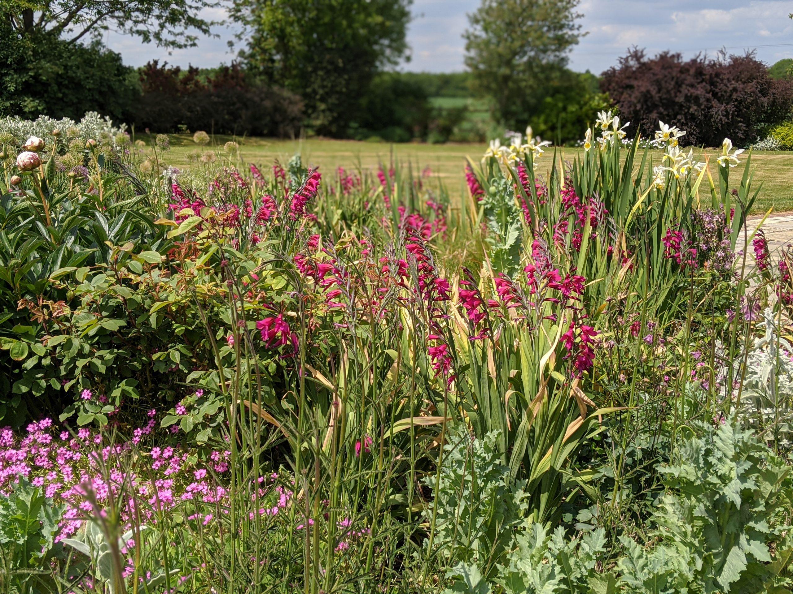 Flower border at The Gardens at Polehanger